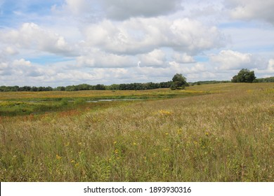 A vast prairie filled with wildflowers and grasses surrounding a pond with a line of dense trees in the background on a summer day at Pine Dunes Forest Preserve in Antioch, Illinois, USA