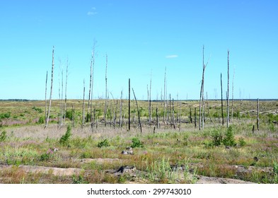 Vast steppe plain, formed after by catastrophic forest fires, with the sandy furrows and the remnants of trees. Steppe plain formed in substitution of the pine forest after vast fires