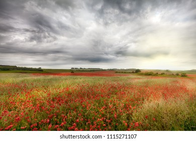 Vast wild red poppy fields landscape in rural Norfolk UK. Cloudy and stormy skies over a crop of wild flowers during late spring in England