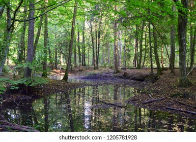 A vast yet shallow swamp full of leaves, moss, and other plants located in the middle of a forest or moor with water banks on both sides of the reservoir and with water reflecting trees and autumn sky