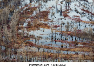 Vasyugan swamp from aerial view. The largest swamp in the world. Tomsk region, Russia