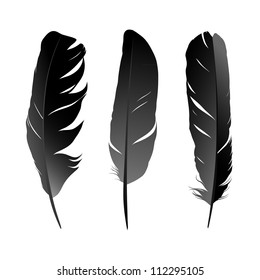 Vector set of black bird's feather on white background. Raster version of the loaded vector