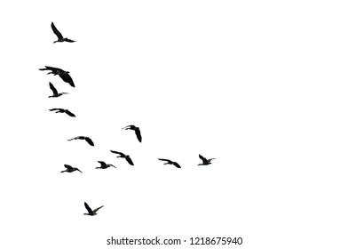 Vector Silhouette Birds White-Fronted Goose Flying Flock of Birds Migrating