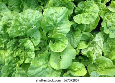 vegetable background.Healthy eating.