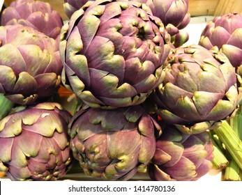 vegetable called globe artichoke, cynara cardunculus,