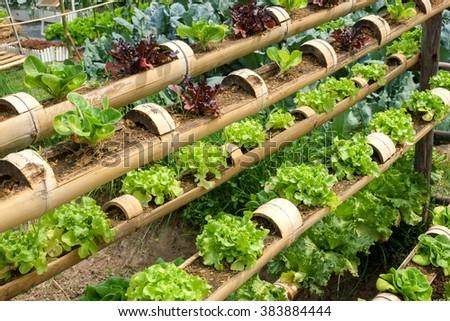 Vegetable Decorated Vertical Garden Idea City Stock Photo (Edit Now ...