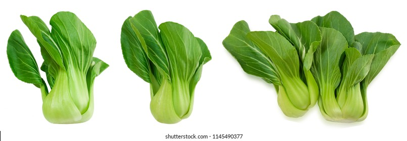 Vegetable, Delicious Fresh Green Bok Choy, Pok Choi or Pak Choi Isolated on White Background.