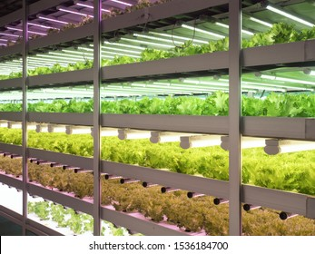 Vegetable factory that grows vegetables with artificial light source and culture solution