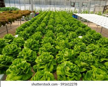 Vegetable farm without soils hydroponics farm