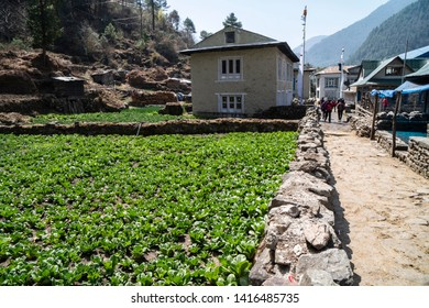 Vegetable field on the way to Everest Base Camp near Phakding village