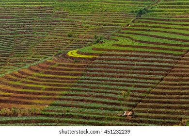 Vegetable field at top view of mountain in raining season.