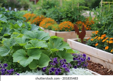 Vegetable and flower garden in raised beds