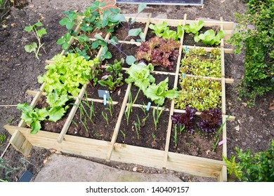 Vegetable garden with assortment vegetables and cold container