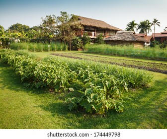 vegetable garden with eggplants, lemon-grasses and asparaguses