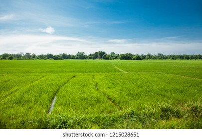 Vegetable garden green rice fields complex cultivation systems the concept of Agro tourism agricultural Sri Lanka