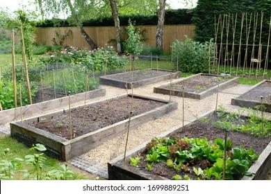 Vegetable garden, growing vegetables in a backyard in England, UK
