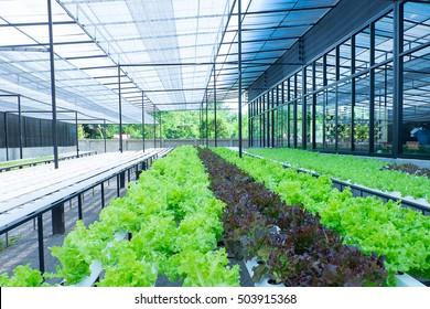 Vegetable garden with hydroponics method.Hydroponics garden.