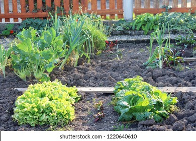 Vegetable garden next to a farm house with salad, cabbage and leek