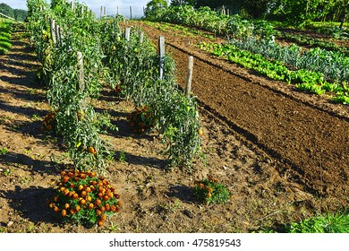 Vegetable Garden on a Personal Plot in the French Village