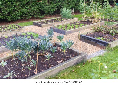 Vegetable garden raised beds made from timber sleepers. Kale (brassica) is  growing in the foreground, UK