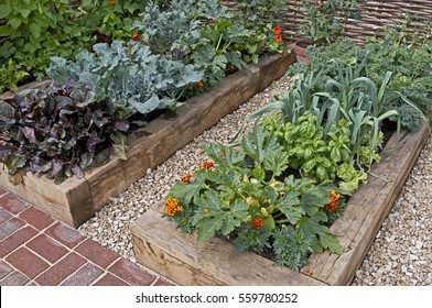 Vegetable garden in raised beds in an Urban garden