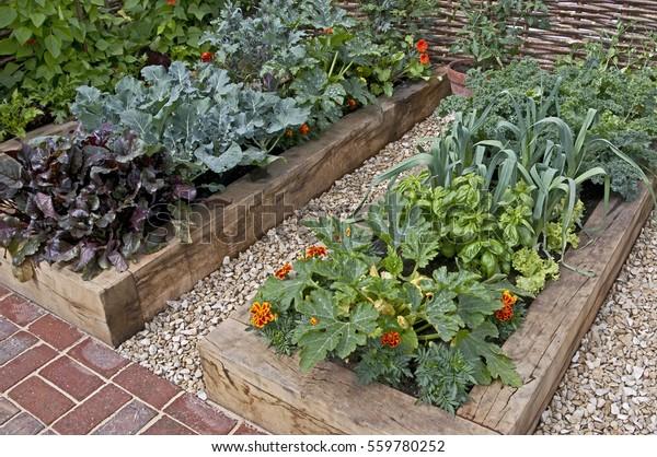 Vegetable garden in raised beds in an Urban garden