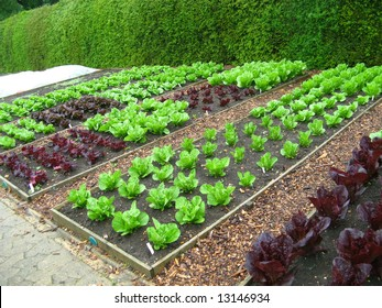 vegetable growing