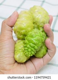 Vegetable and Herb, Hand Holding Fresh Noni, Morinda Citrifolia, Great Morinda, Indian Mulberry, Beach Mulberry or Cheese Fruits with Polysaccharide, Vitamin A, C and Calcium.
