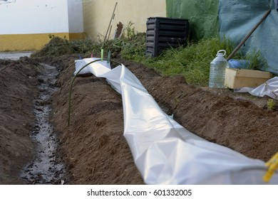 vegetable patch,