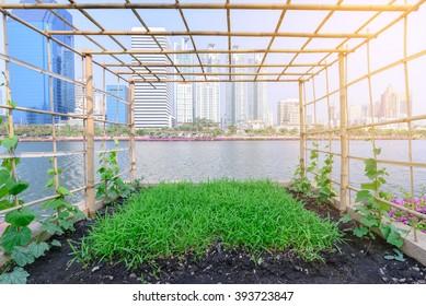 Vegetable plantation in urban garden.