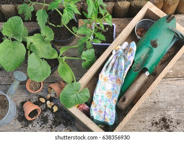 Vegetable Plants And Gardening Tools In A Wooden Box