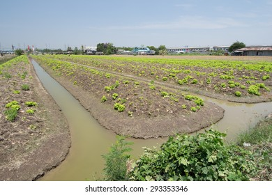 vegetable plot and the area that to prepared  for planting vegetable crops at Nontaburi province, Thailand.