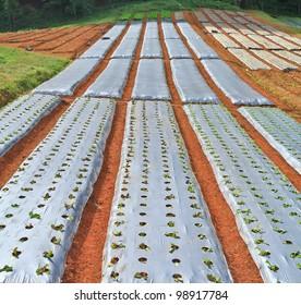 Vegetable plots