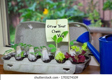 Vegetable seedlings growing in reused egg box on window sill ledge with hand written sign, grow your own veg, save money reduce waste