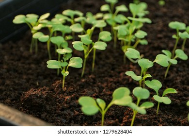 Vegetable seedlings in organic farming (selective focus and shallow depth of field)