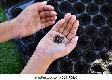 Vegetable seeds for planting.