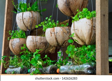 Vegetable window garden, Vegetable planting pot made from the waste material, urban vegetable garden, source of safety food for urban lives