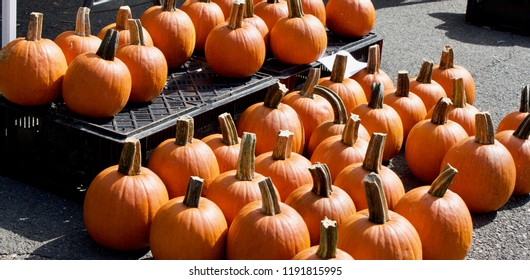 Vegetables of Autumn