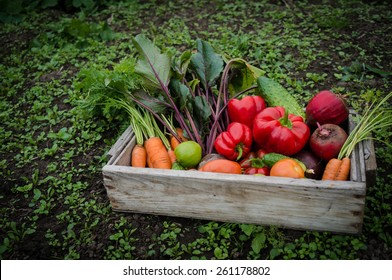 vegetables in a box in the garden