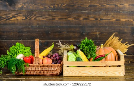 Vegetables from garden or farm on wooden background. Autumn harvest organic crops vegetables. Homegrown vegetables. Fresh organic vegetables in wicker basket and wooden box. Fall harvest concept.