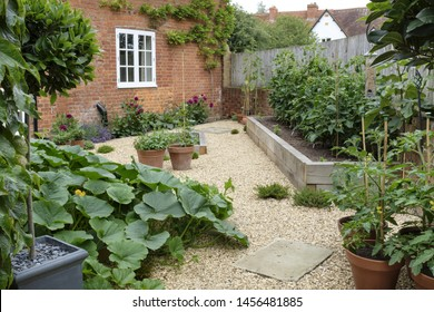 Vegetables growing in a kitchen garden back yard squash pumpkin and tomato plants