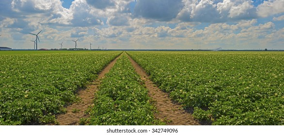 Vegetables growing on a sunny field in summer