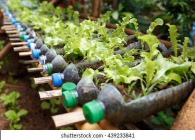 Plastic Bottle Garden Images Stock Photos Amp Vectors