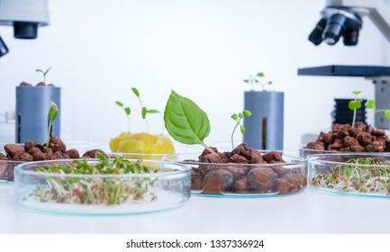 Vegetables hydroponics farm. Hydroponics method of growing plants.