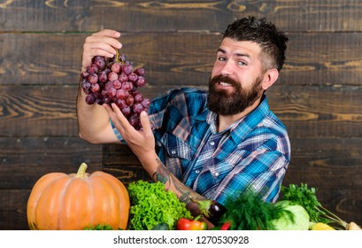 Vegetables organic harvest. Farming concept. Grapes from own garden. Farmer bearded guy with homegrown harvest on table hold grapes. Farmer proud of grapes harvest. Man hold grapes wooden background.