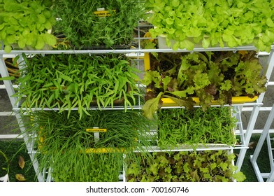 Vegetables are planted in pots and placed on shelves to save space. Suitable for gardening in urban area.