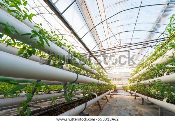 Pflanzen von Gemüse, die in einer aus Metall bestehenden, gezüchteten Grünhautzeiche wachsen