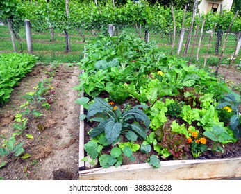 Vegetables in raised garden bed in permaculture garden