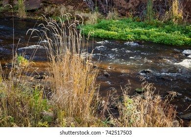 Vegetation along the shore of a small river in autumn.