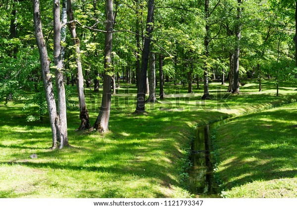 Vegetation with an artificial stream in the garden of Peterhof. Russia, lower Park.